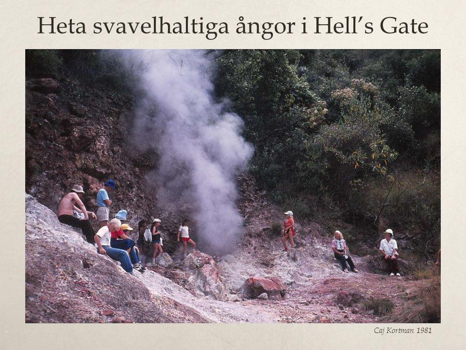 Heta svavelhaltiga ångor i Hell's Gate Caj Kortman 1981