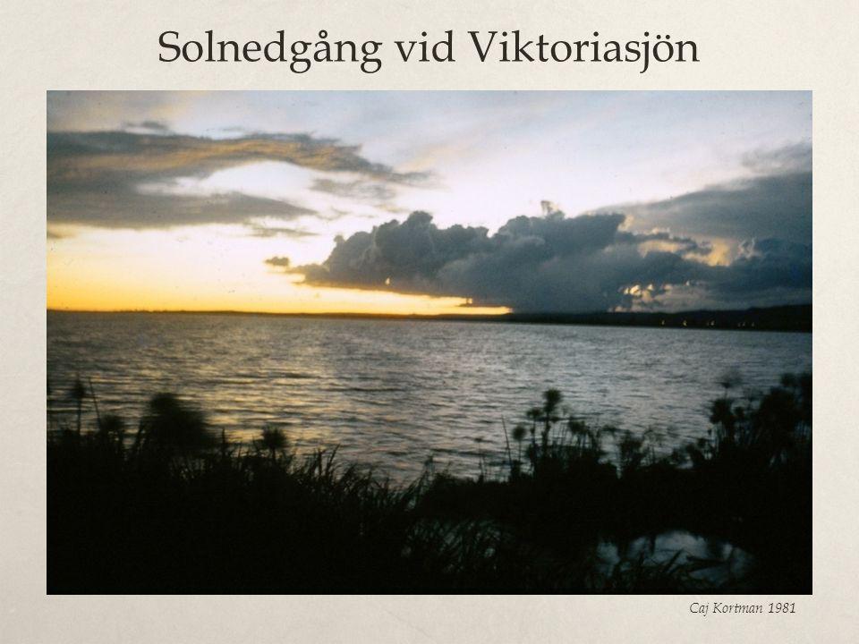 Solnedgång vid Viktoriasjön Caj Kortman 1981