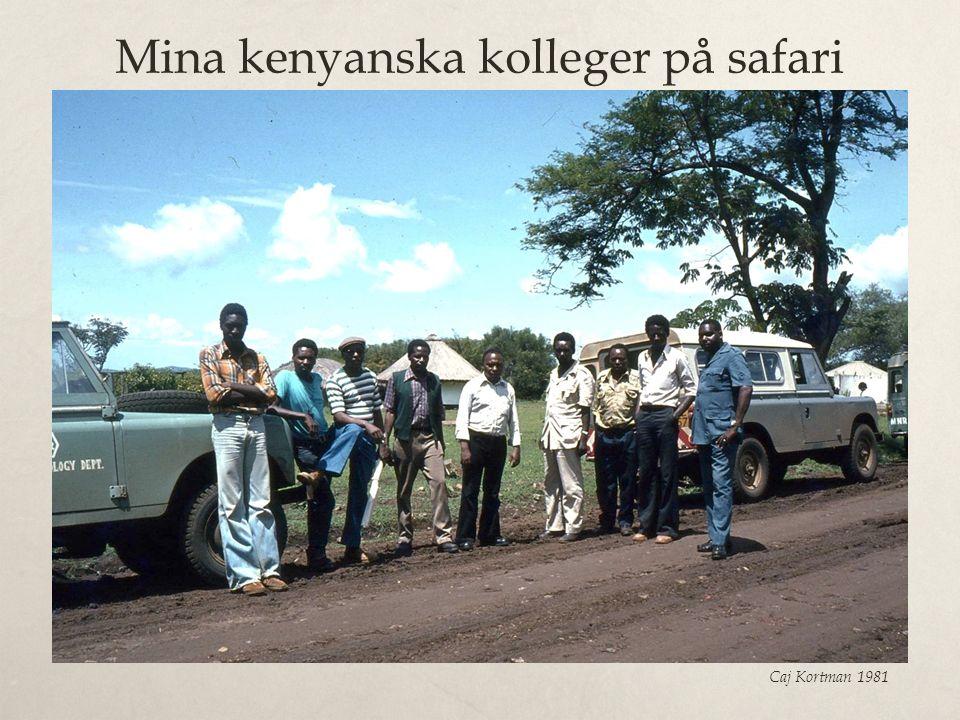 Mina kenyanska kolleger på safari Caj Kortman 1981