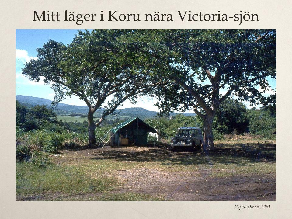 Mitt läger i Koru nära Victoria-sjön Caj Kortman 1981