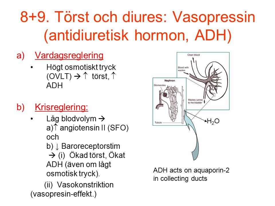 8+9. Törst och diures: Vasopressin (antidiuretisk hormon, ADH) a)Vardagsreglering Högt osmotiskt tryck (OVLT)   törst,  ADH b)Krisreglering: Låg bl