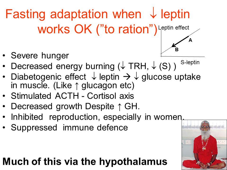 Fasting adaptation when  leptin works OK ( to ration ) Severe hunger Decreased energy burning (  TRH,  (S) ) Diabetogenic effect  leptin   glucose uptake in muscle.