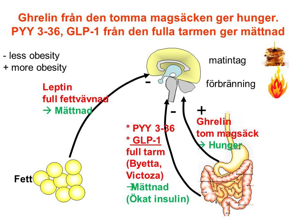 Ghrelin från den tomma magsäcken ger hunger. PYY 3-36, GLP-1 från den fulla tarmen ger mättnad matintag förbränning Leptin full fettvävnad  Mättnad F