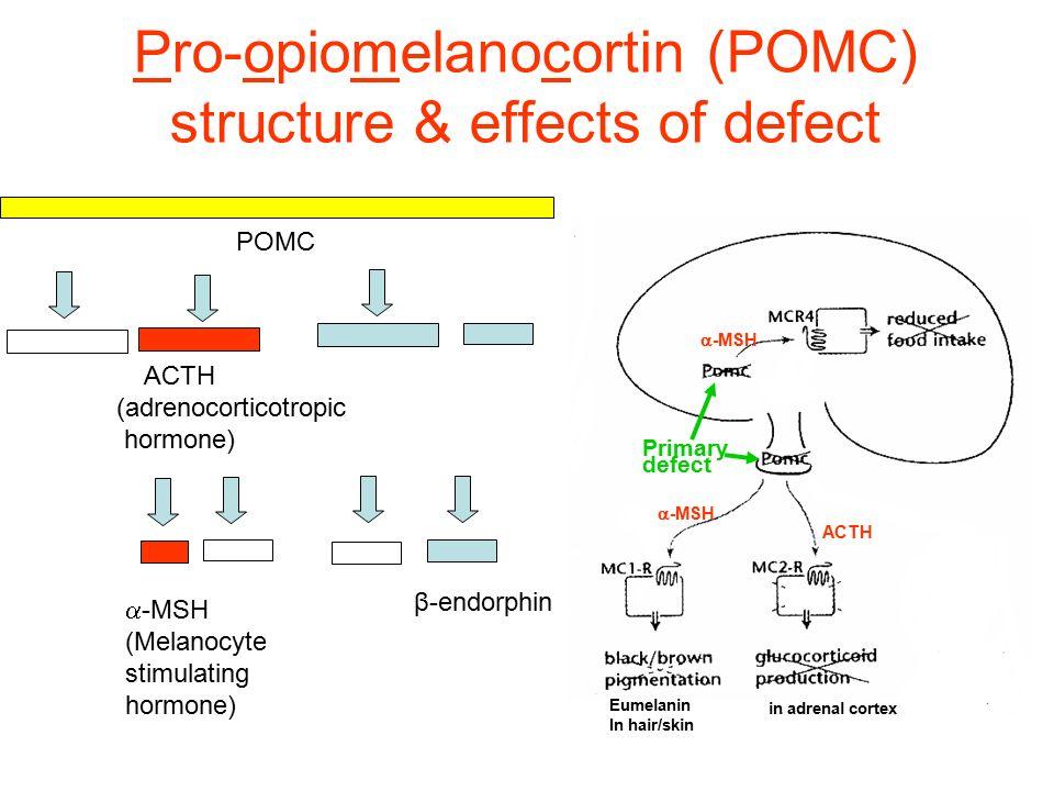 Pro-opiomelanocortin (POMC) structure & effects of defect POMC  -MSH (Melanocyte stimulating hormone) ACTH (adrenocorticotropic hormone) β-endorphin