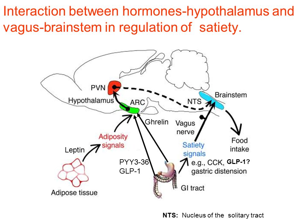 Interaction between hormones-hypothalamus and vagus-brainstem in regulation of satiety. NTS: Nucleus of the solitary tract Leptin PYY3-36 GLP-1 Ghreli