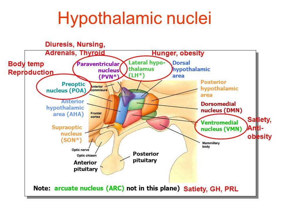 Hypothalamic nuclei Lateral hypo- thalamus (LH*) Dorsal hypothalamic area Posterior hypothalamic area Dorsomedial nucleus (DMN) Ventromedial nucleus (