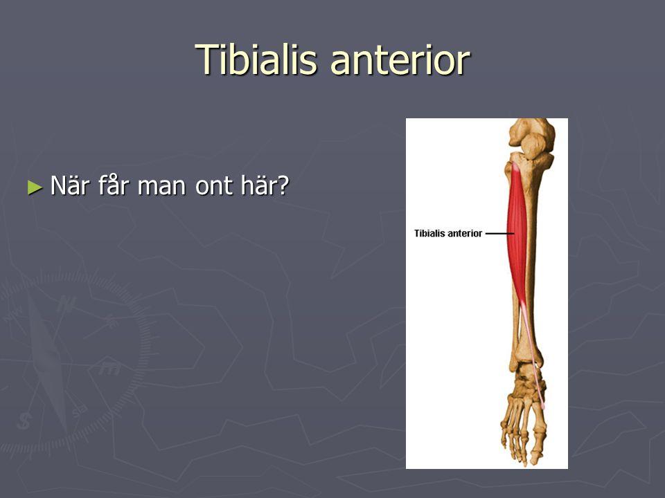 Tibialis anterior ► När får man ont här