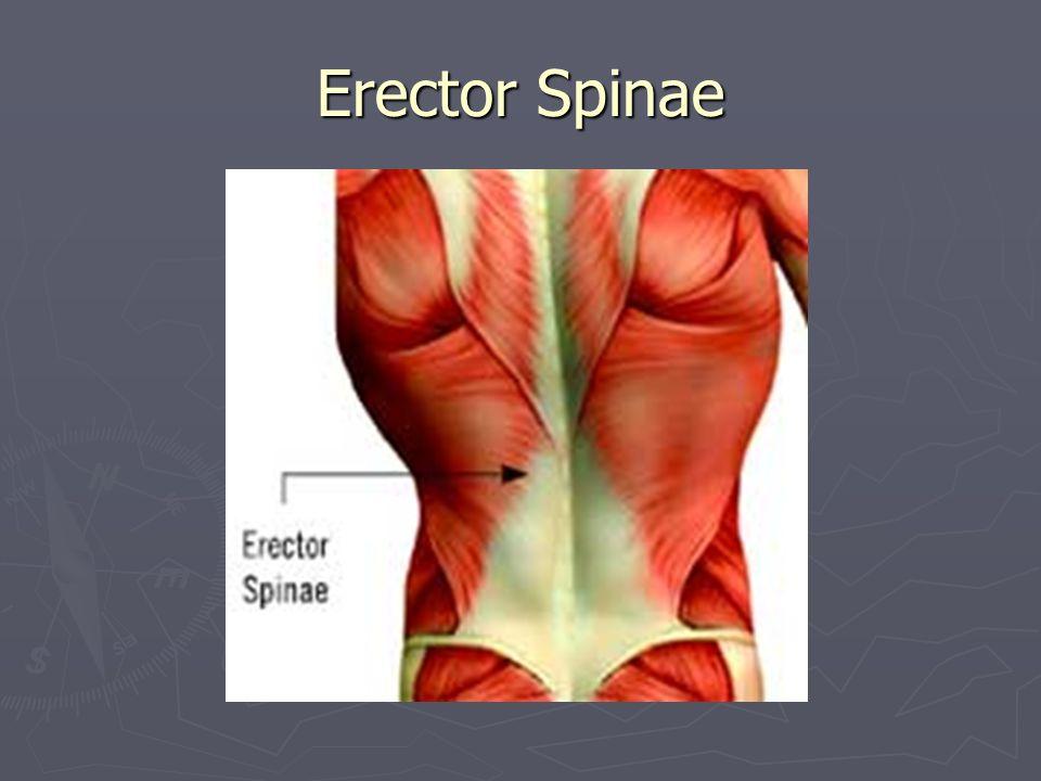 Tibialis anterior ► När får man ont här?