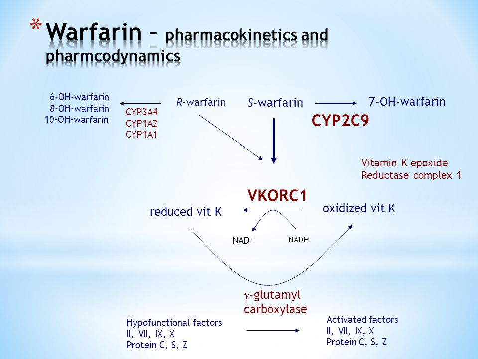 S-warfarin 7-OH-warfarin CYP2C9 R-warfarin 6-OH-warfarin 8-OH-warfarin 10-OH-warfarin CYP3A4 CYP1A2 CYP1A1 oxidized vit K reduced vit K VKORC1 Vitamin K epoxide Reductase complex 1 NAD + NADH Hypofunctional factors II, VII, IX, X Protein C, S, Z Activated factors II, VII, IX, X Protein C, S, Z  -glutamyl carboxylase