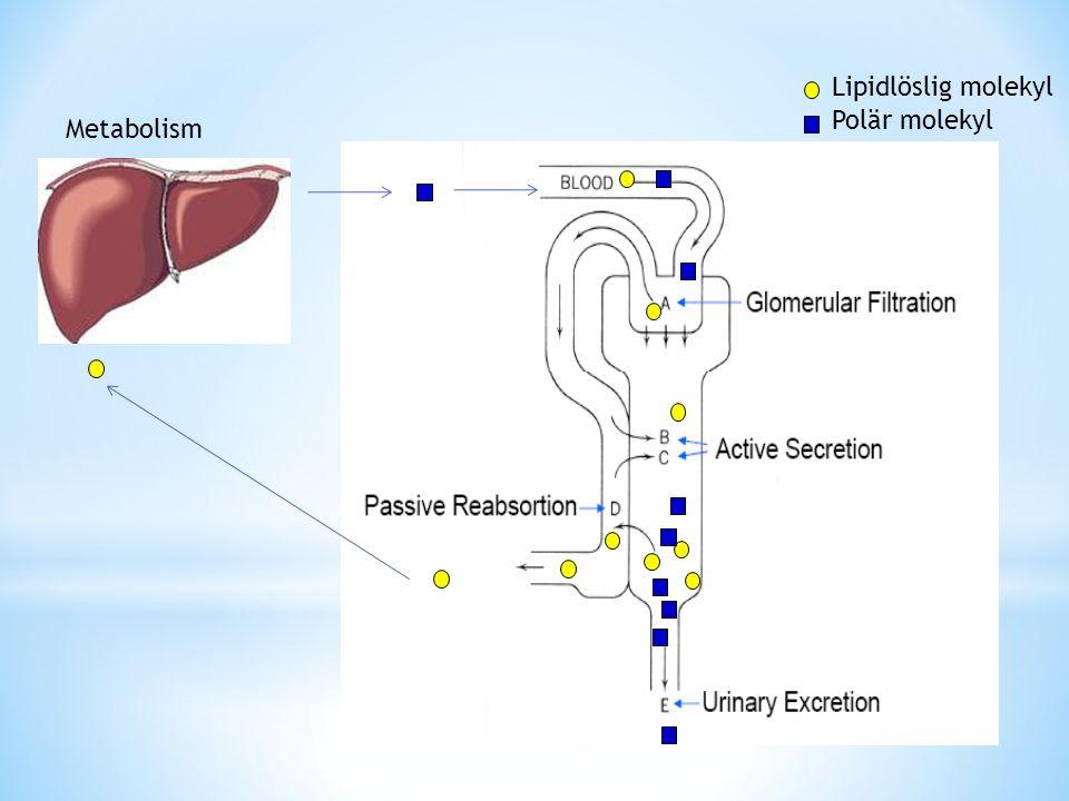 Polär molekyl Lipidlöslig molekyl Metabolism
