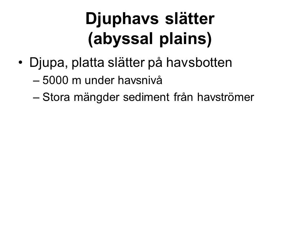 Djuphavs slätter (abyssal plains) Djupa, platta slätter på havsbotten –5000 m under havsnivå –Stora mängder sediment från havströmer