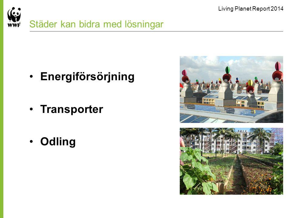Living Planet Report 2014 Städer kan bidra med lösningar Energiförsörjning Transporter Odling
