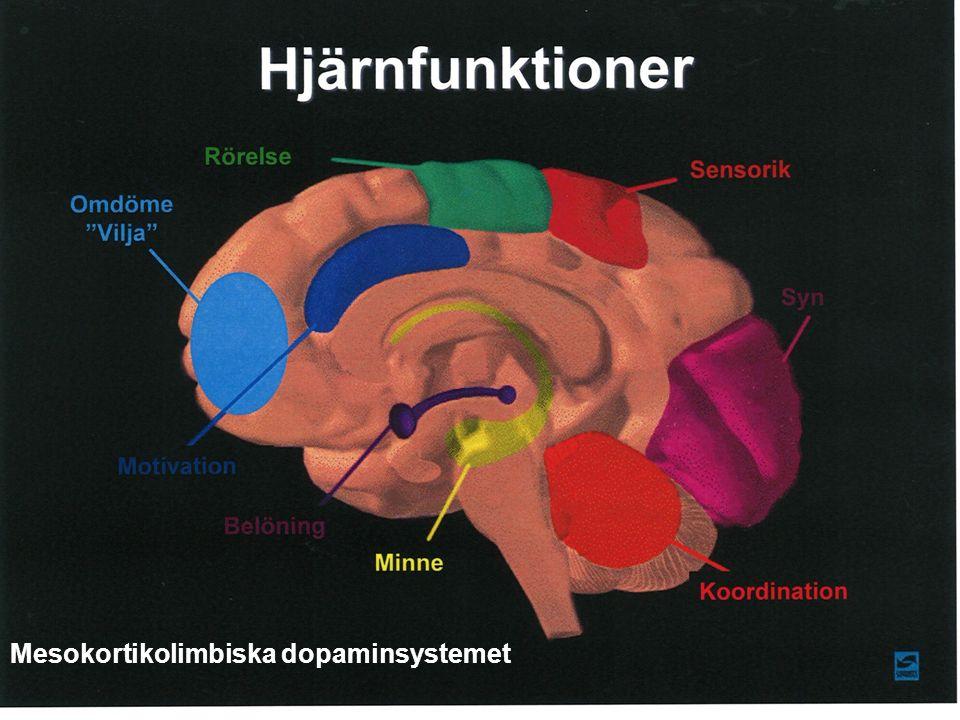 Mesokortikolimbiska dopaminsystemet