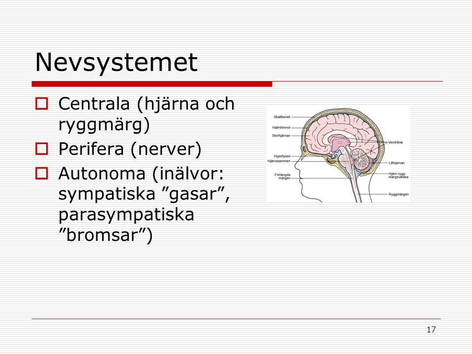 17 Nevsystemet  Centrala (hjärna och ryggmärg)  Perifera (nerver)  Autonoma (inälvor: sympatiska gasar , parasympatiska bromsar )
