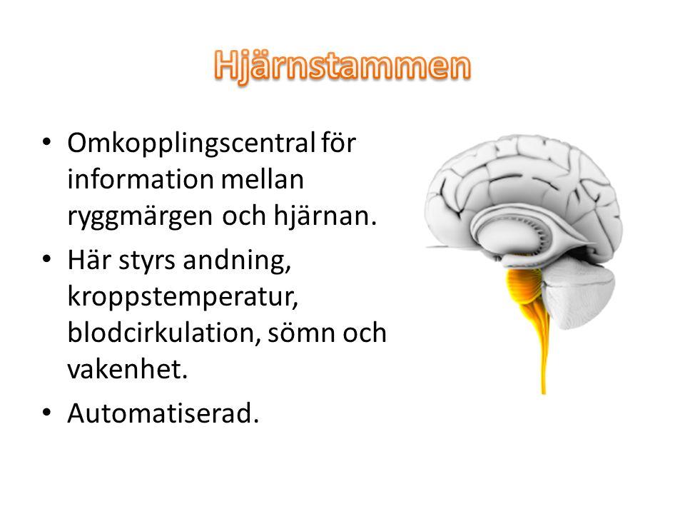 Omkopplingscentral för information mellan ryggmärgen och hjärnan. Här styrs andning, kroppstemperatur, blodcirkulation, sömn och vakenhet. Automatiser