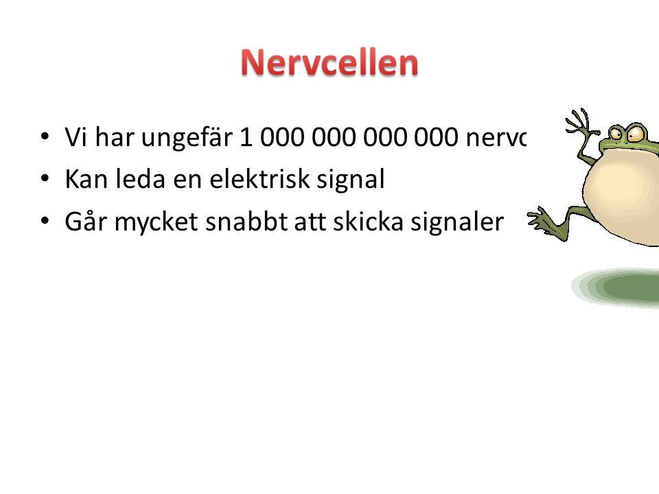 Vi har ungefär 1 000 000 000 000 nervceller Kan leda en elektrisk signal Går mycket snabbt att skicka signaler