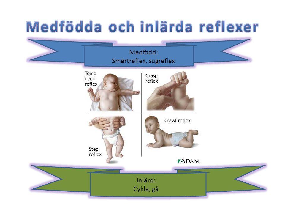 Medfödd: Smärtreflex, sugreflex Inlärd: Cykla, gå