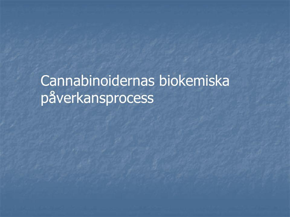Akut påverkan har två faser Högdos = utåtriktad och aktiv Låg dos = inåtriktad och aktiv Cannabisrusen Kronisk påverkan utvecklas i förhållande till frekvens och tid i missbruk Låg dos = inaktiv
