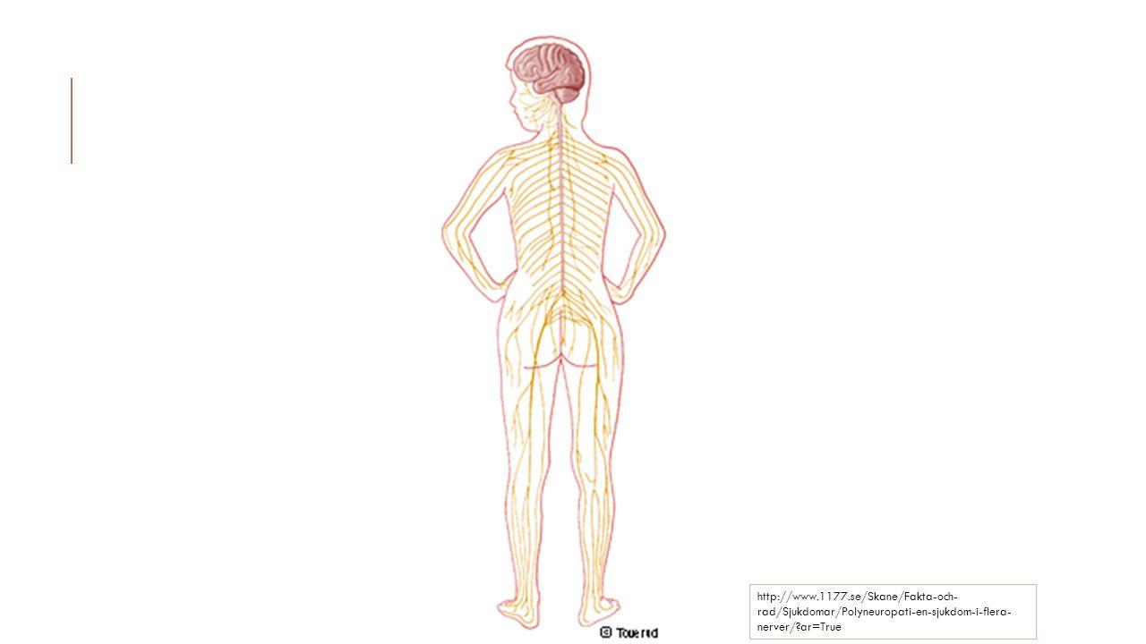http://www.1177.se/Skane/Fakta-och- rad/Sjukdomar/Polyneuropati-en-sjukdom-i-flera- nerver/?ar=True