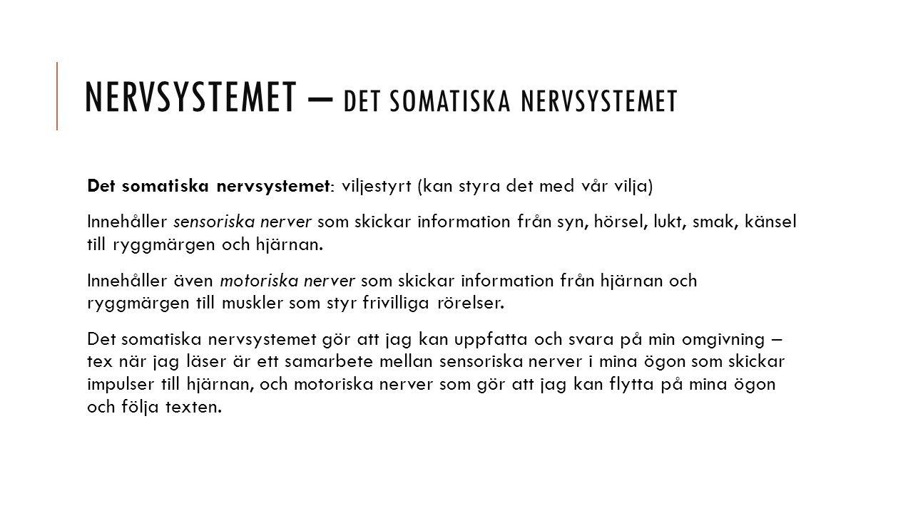 NERVSYSTEMET – DET SOMATISKA NERVSYSTEMET Det somatiska nervsystemet: viljestyrt (kan styra det med vår vilja) Innehåller sensoriska nerver som skickar information från syn, hörsel, lukt, smak, känsel till ryggmärgen och hjärnan.