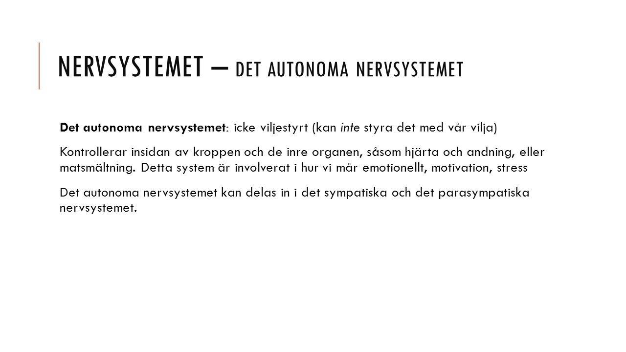 NERVSYSTEMET – DET AUTONOMA NERVSYSTEMET Det autonoma nervsystemet: icke viljestyrt (kan inte styra det med vår vilja) Kontrollerar insidan av kroppen och de inre organen, såsom hjärta och andning, eller matsmältning.
