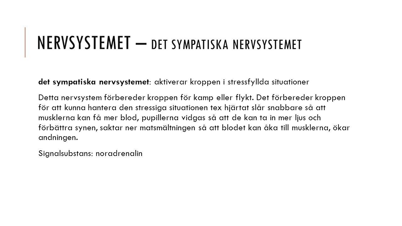 NERVSYSTEMET – DET SYMPATISKA NERVSYSTEMET det sympatiska nervsystemet: aktiverar kroppen i stressfyllda situationer Detta nervsystem förbereder kroppen för kamp eller flykt.