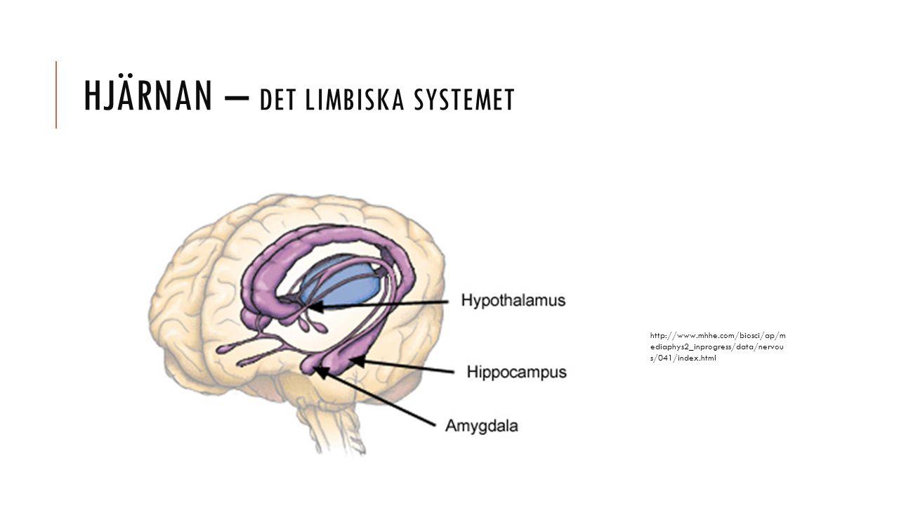 HJÄRNAN – DET LIMBISKA SYSTEMET http://www.mhhe.com/biosci/ap/m ediaphys2_inprogress/data/nervou s/041/index.html