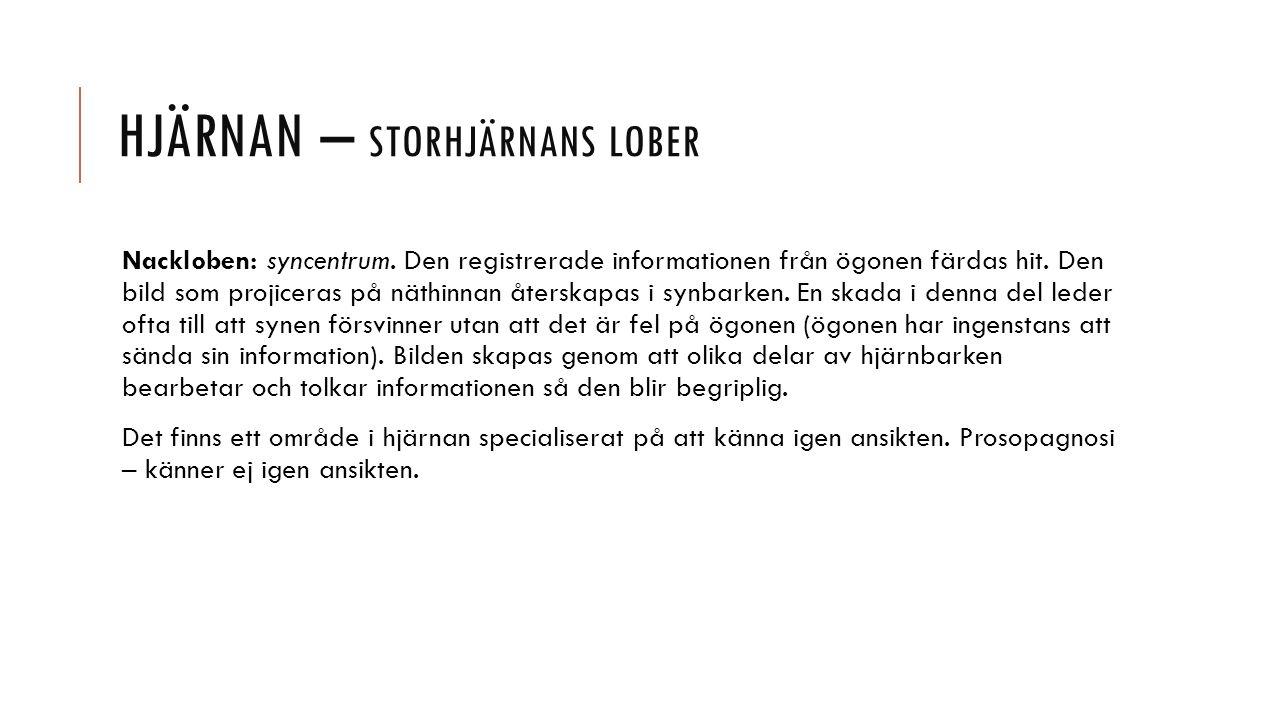 HJÄRNAN – STORHJÄRNANS LOBER Nackloben: syncentrum.