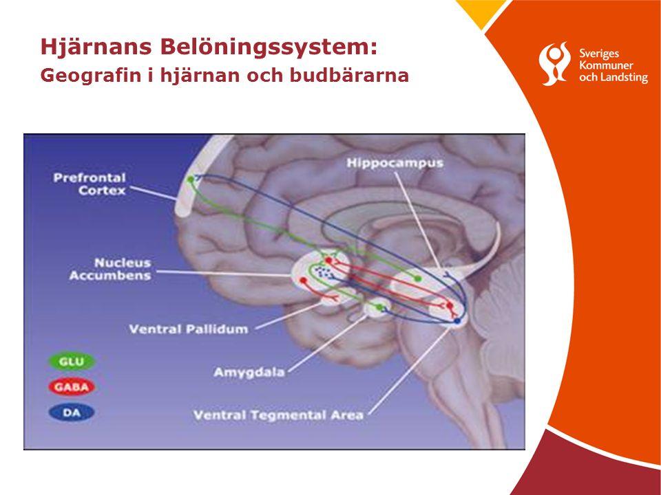 Hjärnans Belöningssystem: Geografin i hjärnan och budbärarna