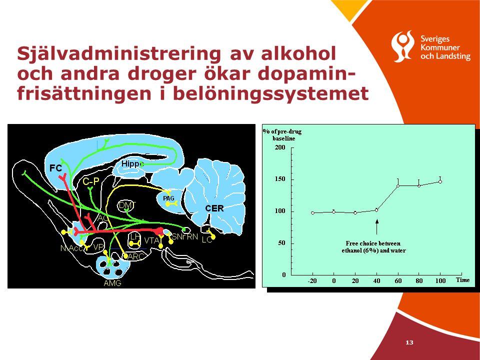 13 Självadministrering av alkohol och andra droger ökar dopamin- frisättningen i belöningssystemet