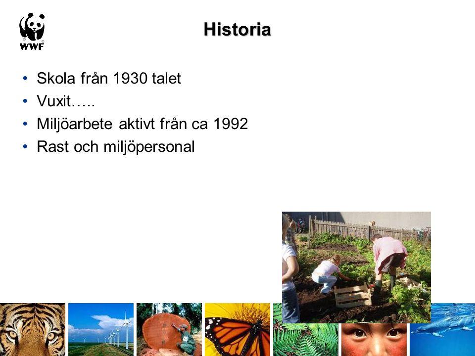Historia Skola från 1930 talet Vuxit….. Miljöarbete aktivt från ca 1992 Rast och miljöpersonal