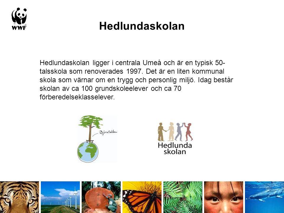 Hedlundaskolan Hedlundaskolan ligger i centrala Umeå och är en typisk 50- talsskola som renoverades 1997. Det är en liten kommunal skola som värnar om