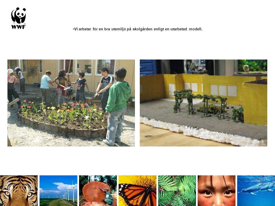 Vi arbetar för en bra utemiljö på skolgården enligt en utarbetad modell.