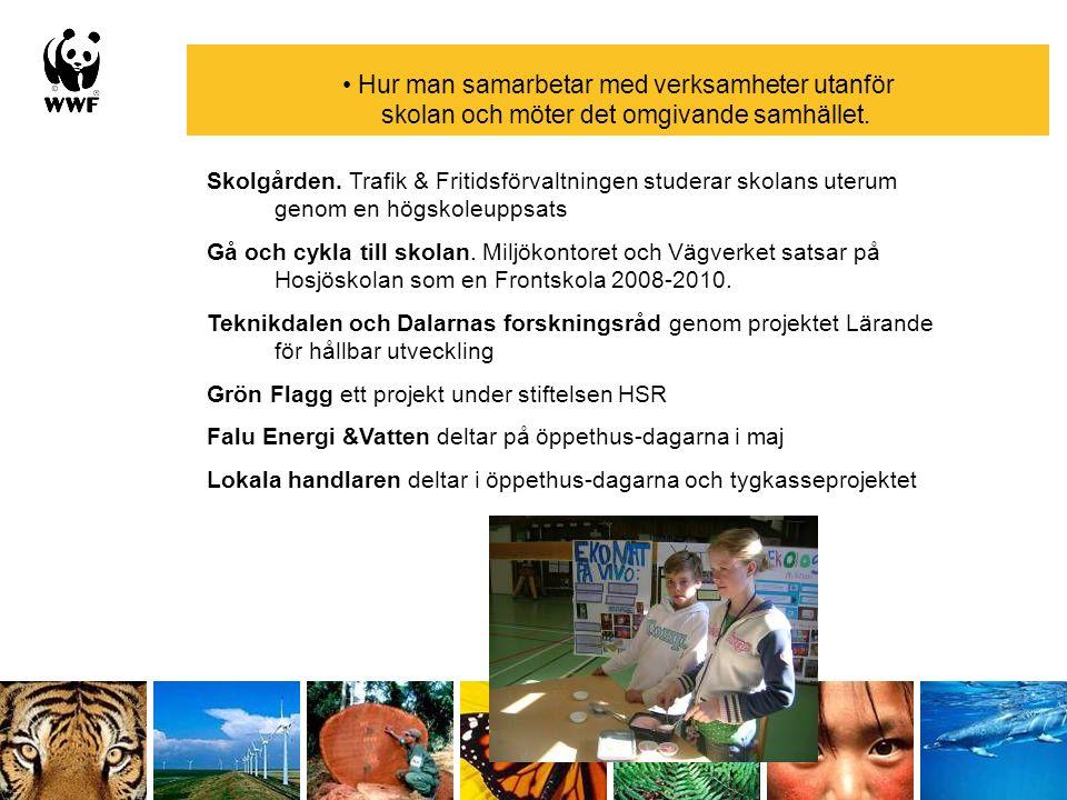 Hur man samarbetar med verksamheter utanför skolan och möter det omgivande samhället. Skolgården. Trafik & Fritidsförvaltningen studerar skolans uteru