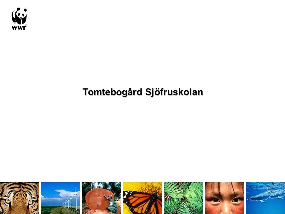 Tomtebogård Sjöfruskolan