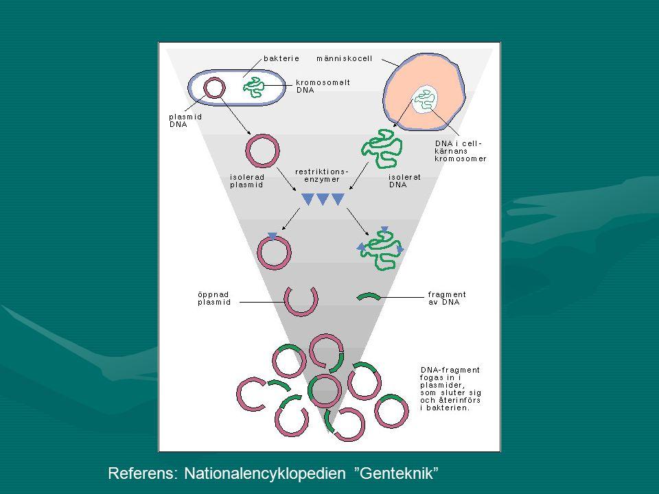 Gen-etik Embryonala stamceller, fosterstamcellerEmbryonala stamceller, fosterstamceller Överblivna ägg från provrörsbefruktningar odlas.Överblivna ägg från provrörsbefruktningar odlas.