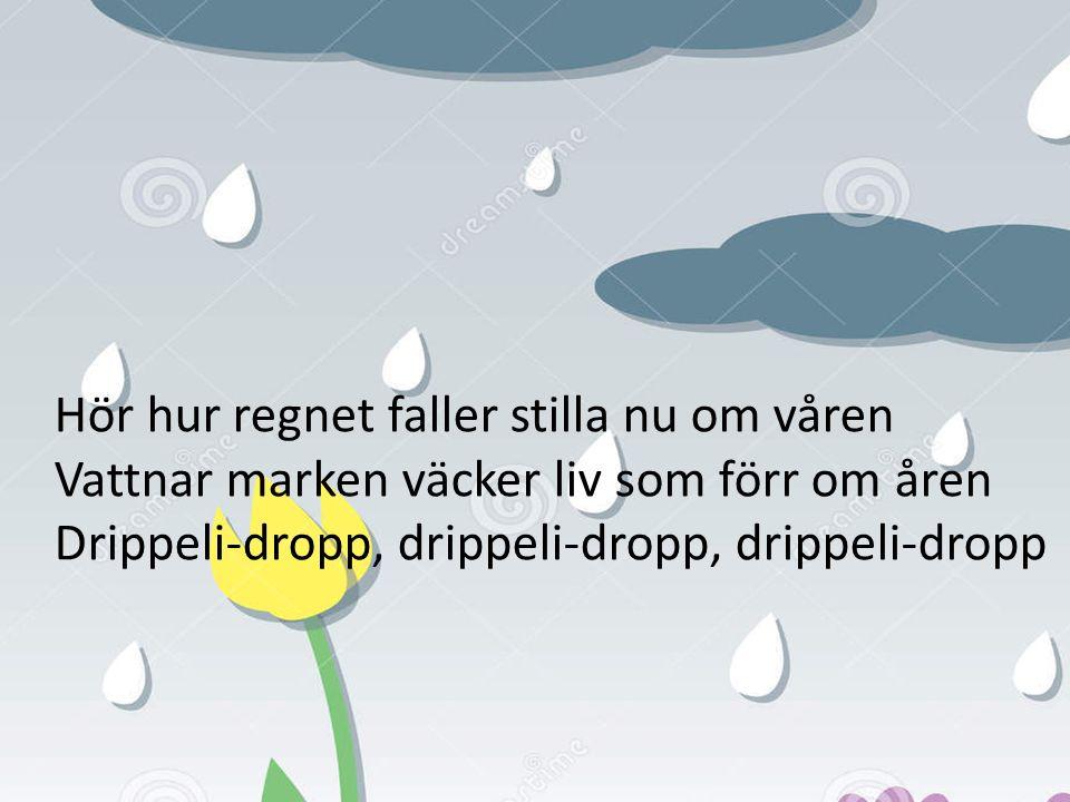 Hör hur regnet faller stilla nu om våren Vattnar marken väcker liv som förr om åren Drippeli-dropp, drippeli-dropp, drippeli-dropp