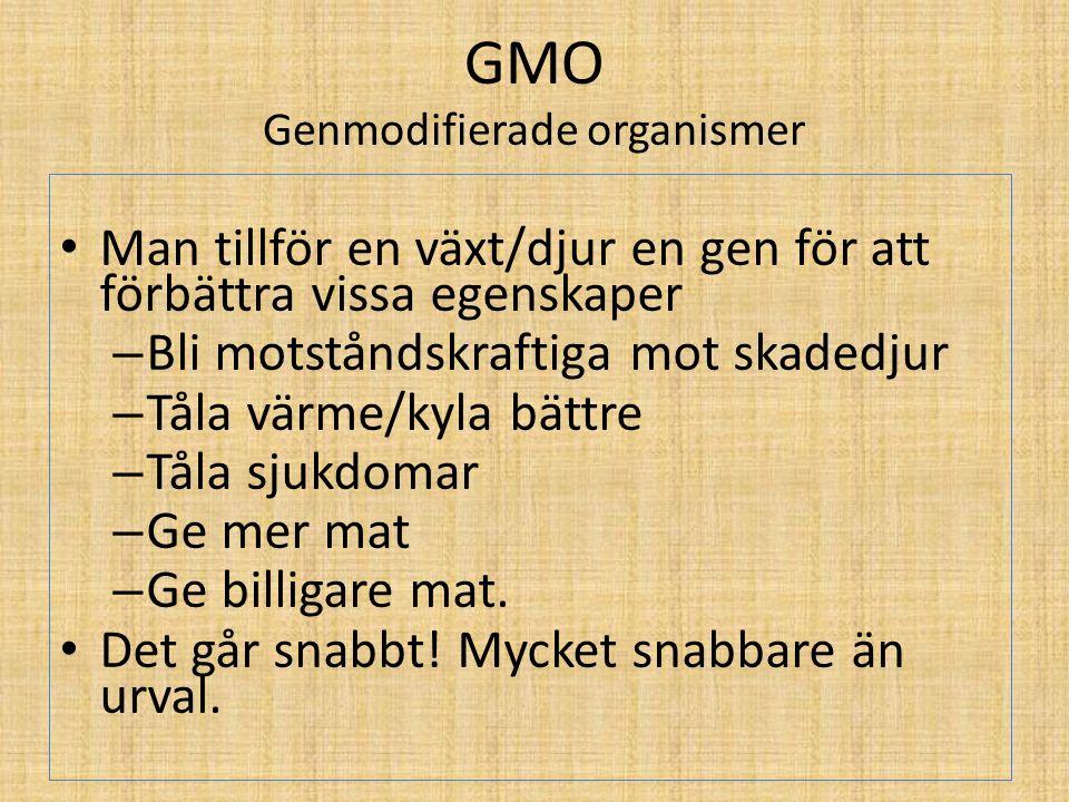 GMO Genmodifierade organismer Man tillför en växt/djur en gen för att förbättra vissa egenskaper – Bli motståndskraftiga mot skadedjur – Tåla värme/ky