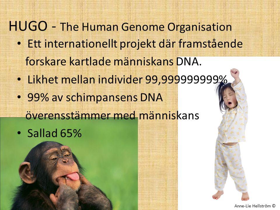 HUGO - The Human Genome Organisation Ett internationellt projekt där framstående forskare kartlade människans DNA. Likhet mellan individer 99,99999999
