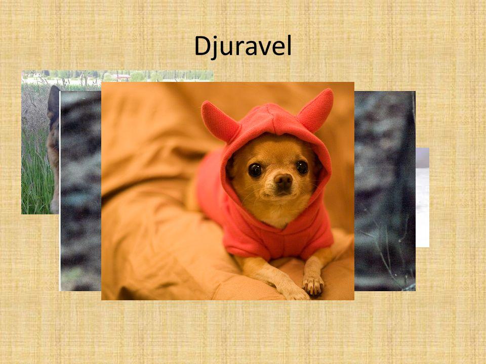 Djuravel