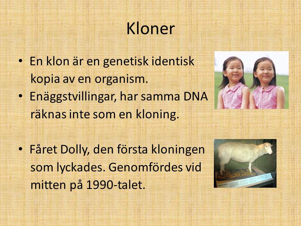 Kloner En klon är en genetisk identisk kopia av en organism. Enäggstvillingar, har samma DNA räknas inte som en kloning. Fåret Dolly, den första kloni