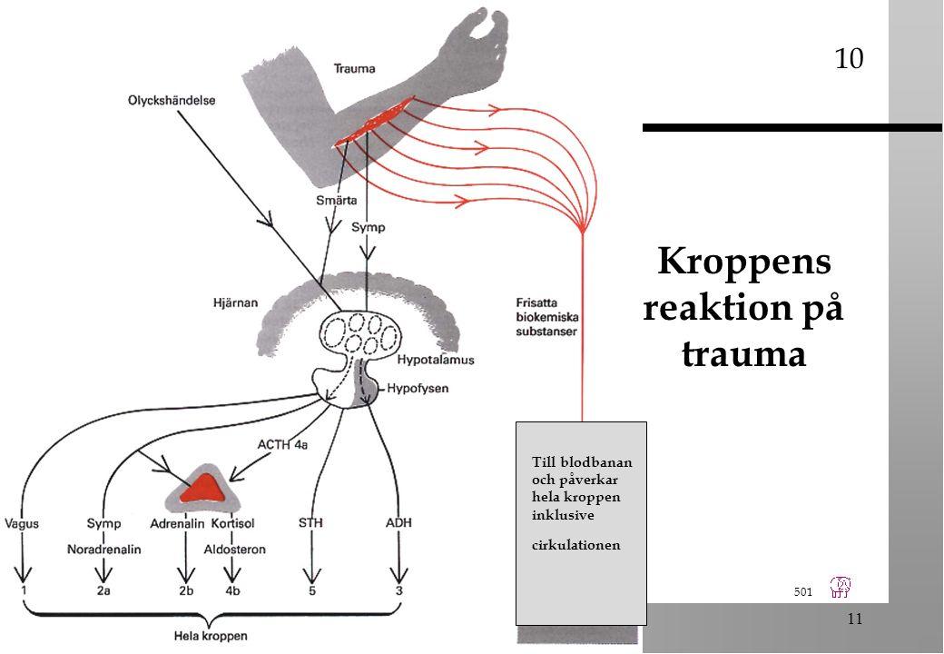 501 11 Kroppens reaktion på trauma 10 Till blodbanan och påverkar hela kroppen inklusive cirkulationen