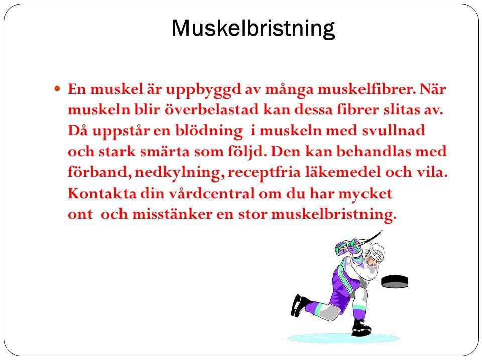 Muskelbristning En muskel är uppbyggd av många muskelfibrer.
