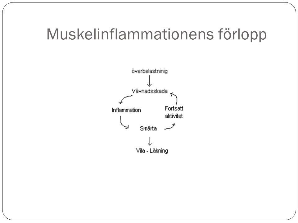 Muskelinflammationens förlopp