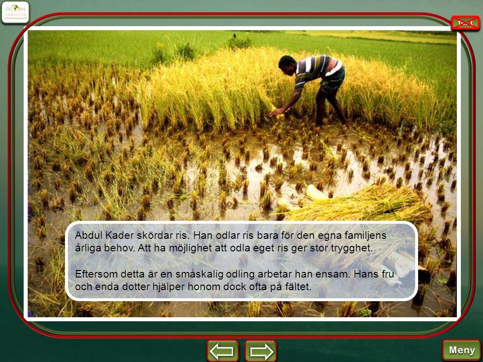 Abdul Kader skördar ris. Han odlar ris bara för den egna familjens årliga behov. Att ha möjlighet att odla eget ris ger stor trygghet. Eftersom detta
