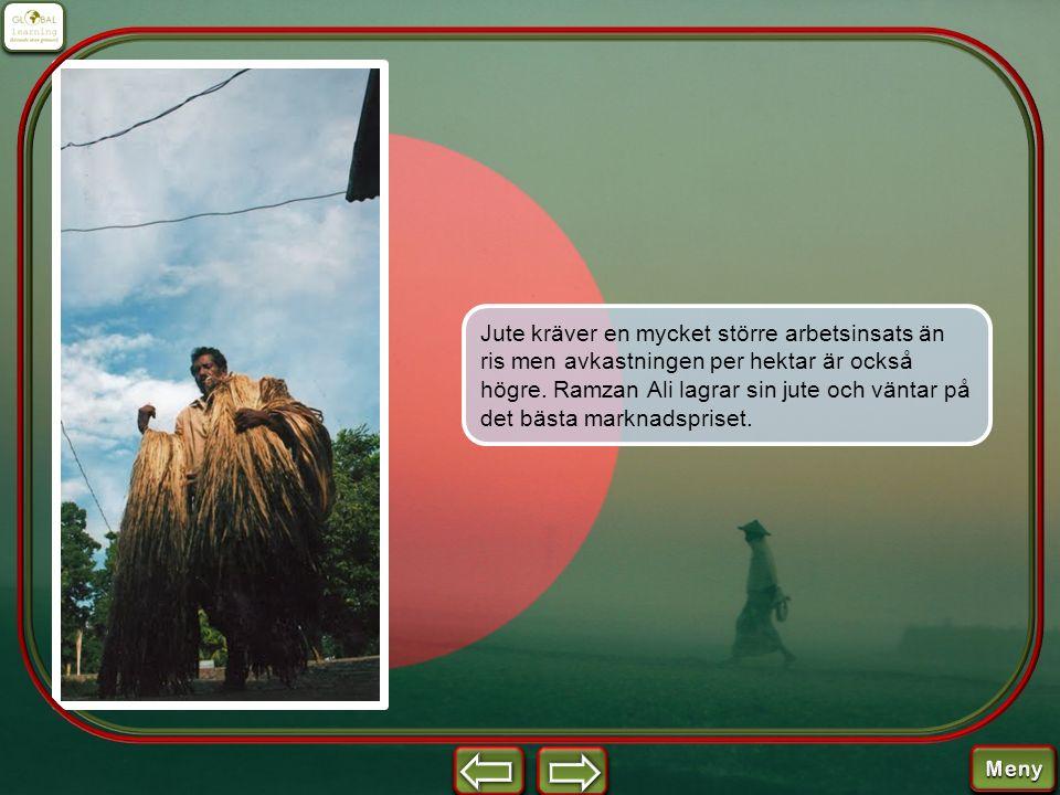Jute kräver en mycket större arbetsinsats än ris men avkastningen per hektar är också högre. Ramzan Ali lagrar sin jute och väntar på det bästa markna