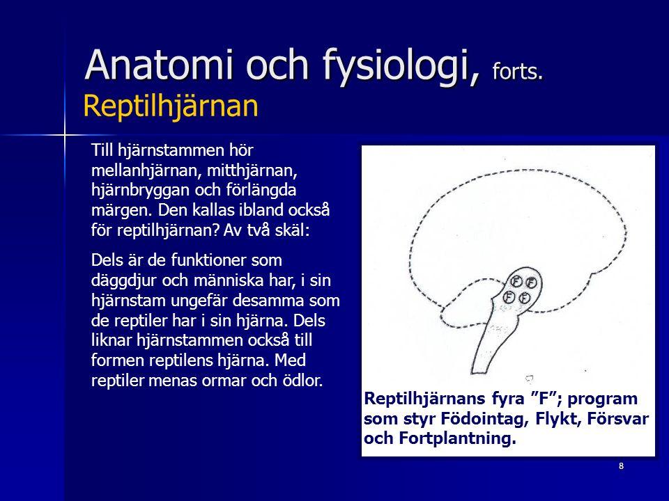 8 Anatomi och fysiologi, forts. Till hjärnstammen hör mellanhjärnan, mitthjärnan, hjärnbryggan och förlängda märgen. Den kallas ibland också för repti