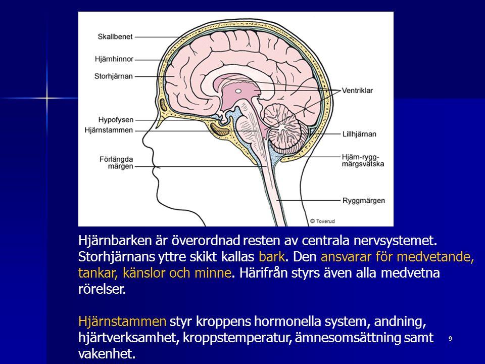 9 Hjärnbarken är överordnad resten av centrala nervsystemet. Storhjärnans yttre skikt kallas bark. Den ansvarar för medvetande, tankar, känslor och mi