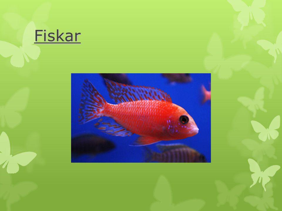 Fiskar  är de första ryggradsdjuren  andas med gälar och har inga lungor  är växelvarma  har en yttre- eller inre befruktning.