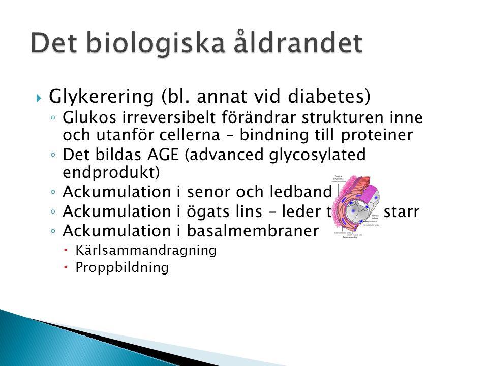  Glykerering (bl.